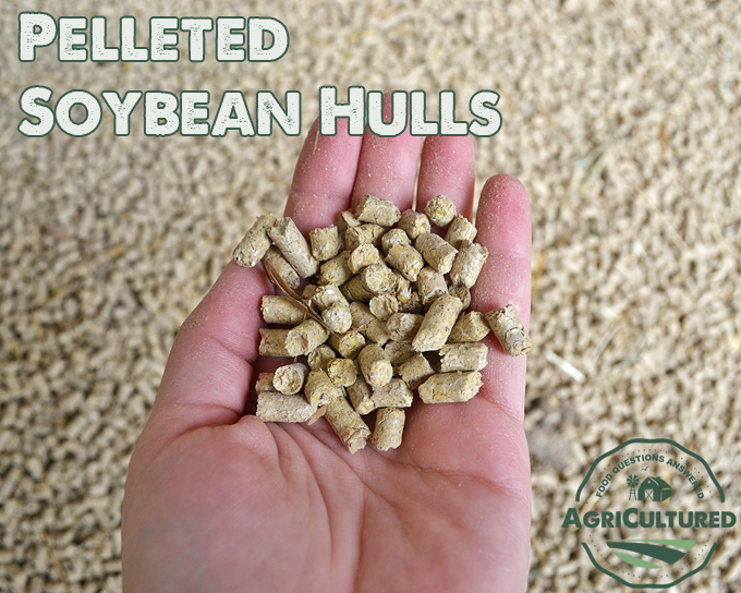 Pelleted soybean hulls are a great protein and fiber source as part of a total mixed ration for dairy cattle.