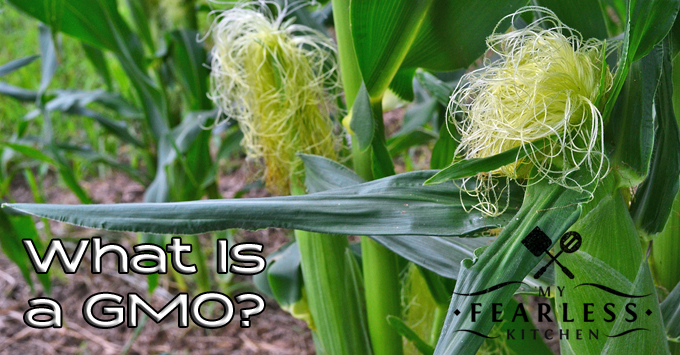 What is a GMO? from My Fearless Kitchen. The term GMO gets tossed around like a dirty word. What have you heard about GMOs? Do you know what they are? Find out what a GMO really is here.