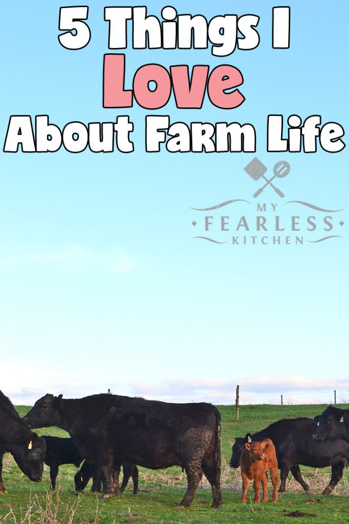 5 Things I Love About Farm Life from My Fearless Kitchen. There's no doubt about it, farm life is pretty amazing! Here are the top five things that I love about farm life, including cows, hay, and raising our family on the farm! #farms #farmlife #cows