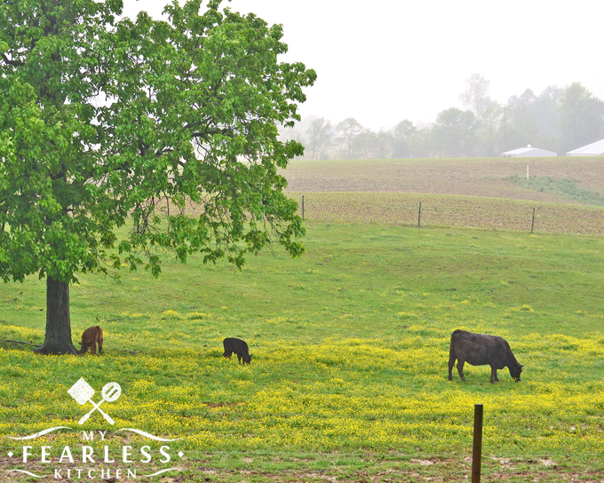 5 Things I Love About Farm Life from My Fearless Kitchen. There's no doubt about it, farm life is pretty amazing! Here are the top five things that I love about farm life, including cows, hay, and raising our family on the farm!