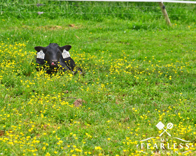 black calf in a green field with yellow flowers