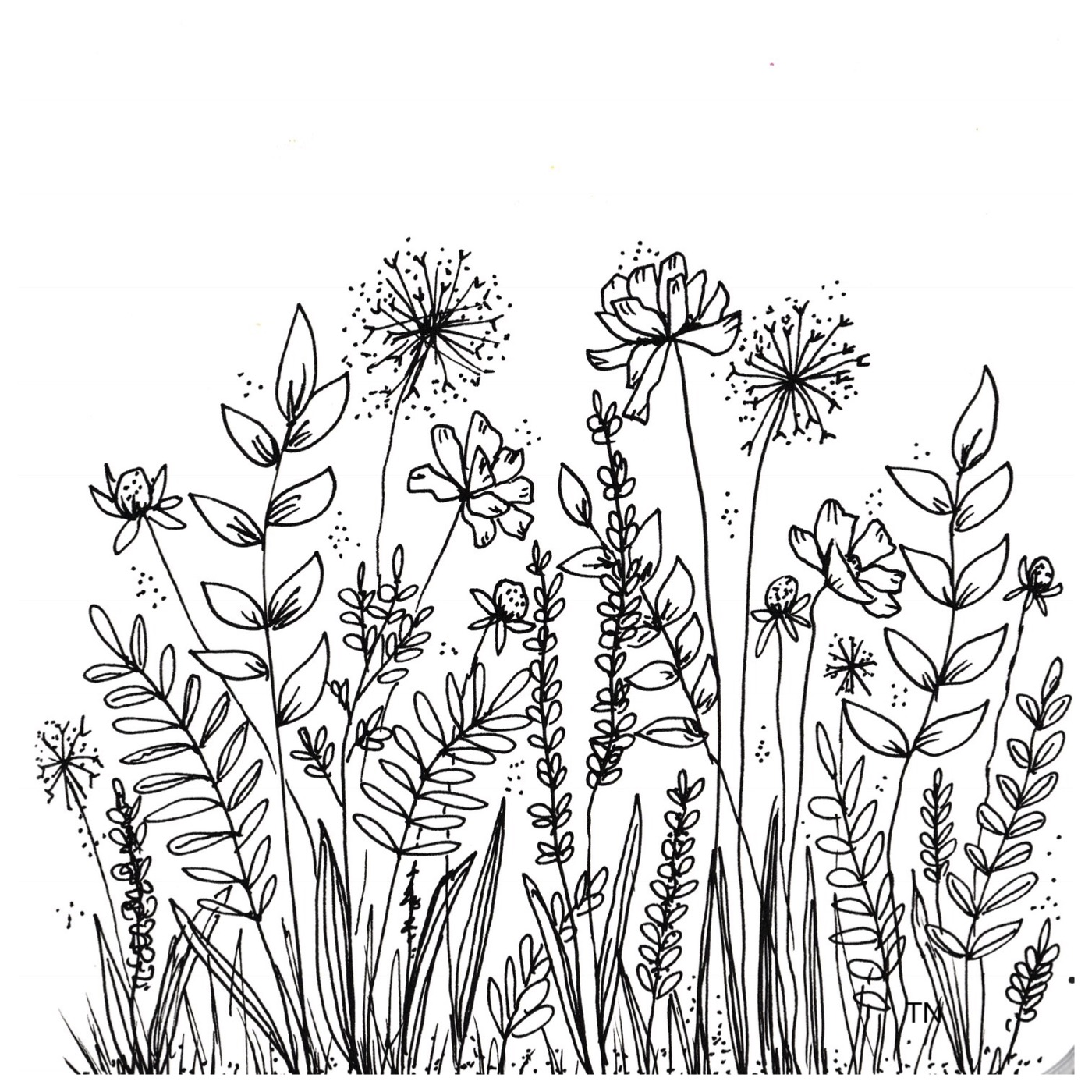 Flower Line Drawing Book