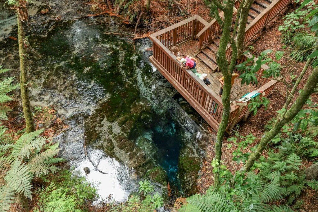 Best places to visit in the North Island, New Zealand - Hamurana Springs, Rotorua