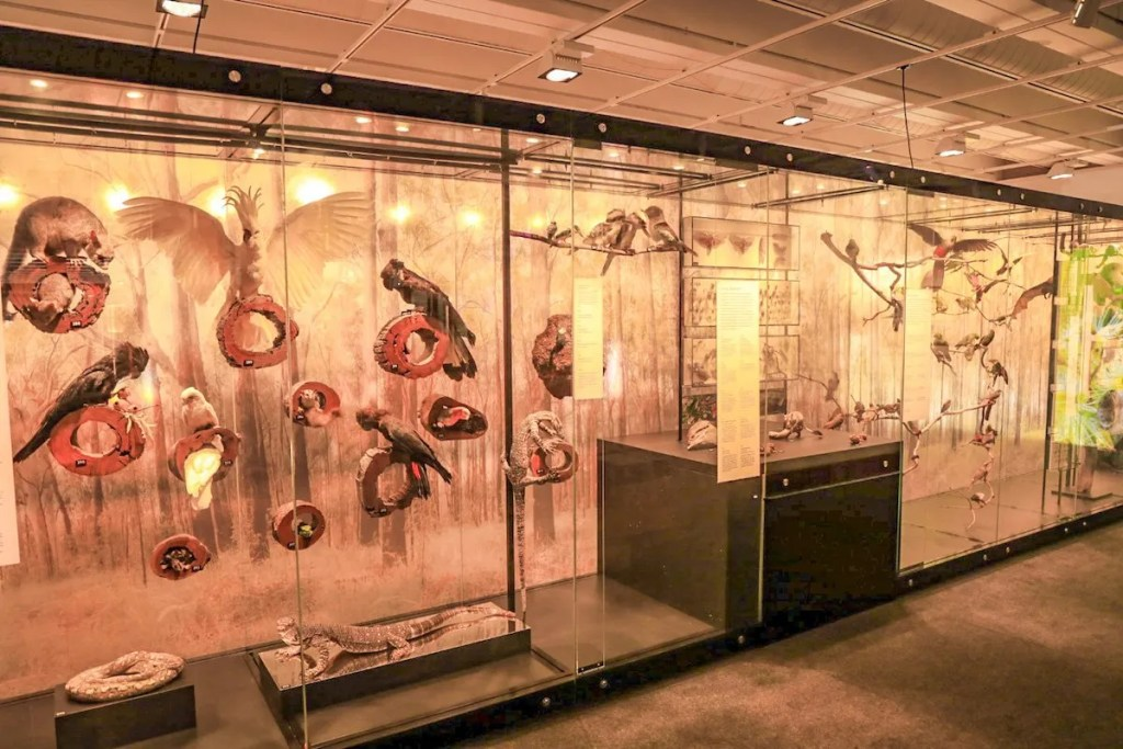 Queensland Museum - exploring Brisbane on a budget