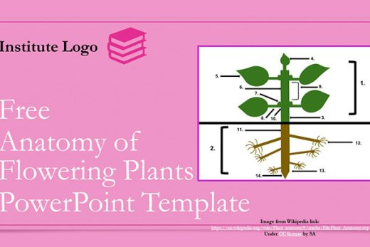 free-anatomy-of-flowering-plants-google-slides-themes-ppt-presentation