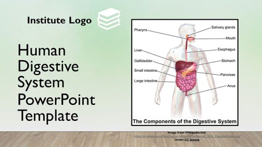 free-digestion-absorption-google-slides-themes-ppt-template