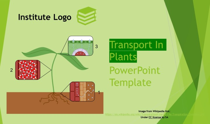 Free Transport In Plants Powerpoint Template Myfreeslides