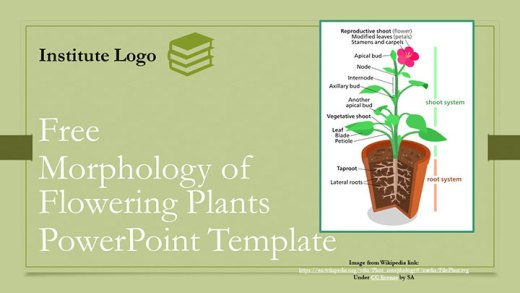 morphology-in-flowering-plants-google-slide-ppt-presentation