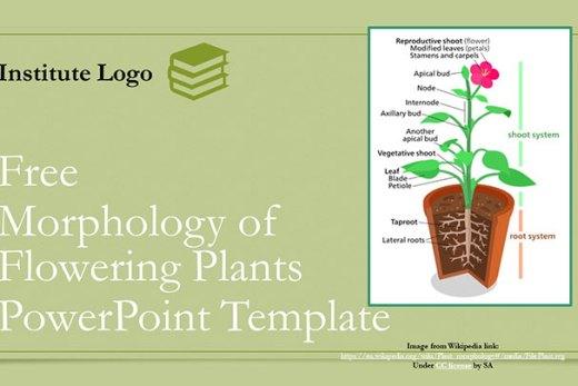 morphology-in-flowering-plants-google-slide-ppt-presentation