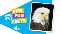 Custom Fun Facts Slides on Animals