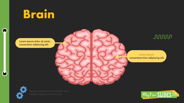 Brain Presentation Slide