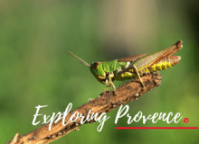 MyFrenchLife™ – MyFrenchLife.org – exploring Provence – La Motte – Var – edible crickets – meal worms