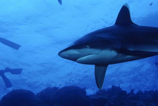 shark lesson plans