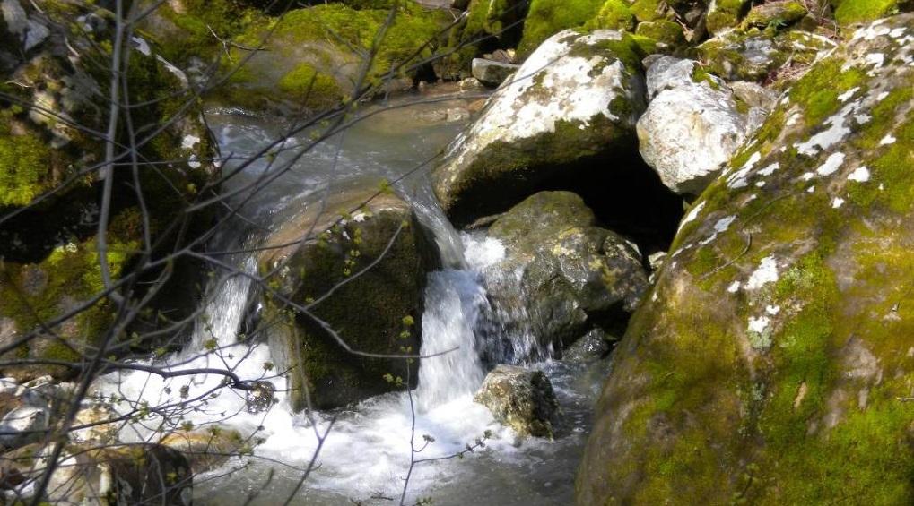 Stone Soup Lesson Plans Freshplans