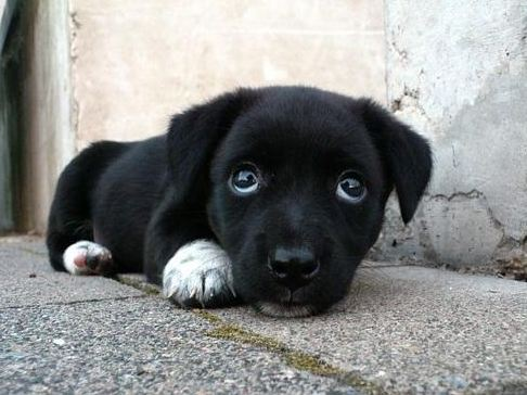 How to Make a Puppy Stop Crying