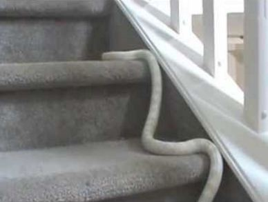 Can Snakes Climb Stairs