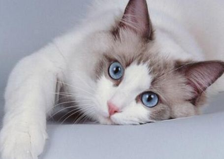 What is Best Age to Neuter a Cat