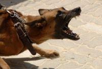 Symptoms of Rabies in Dogs
