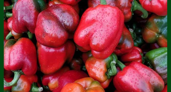 Capsicum Red F1 Hybrid - 20 Seeds - MGS1178