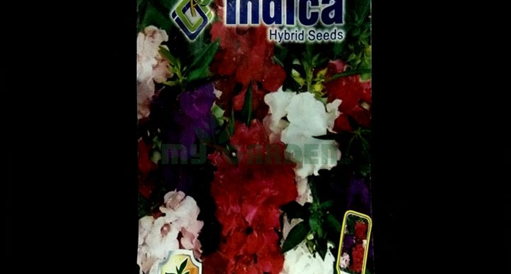 Balsam Double Mixed – (50 seeds) – Indica - Indian