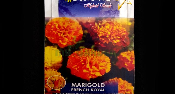 Marigold French Royal – (50 seeds) – Omaxe - Indian