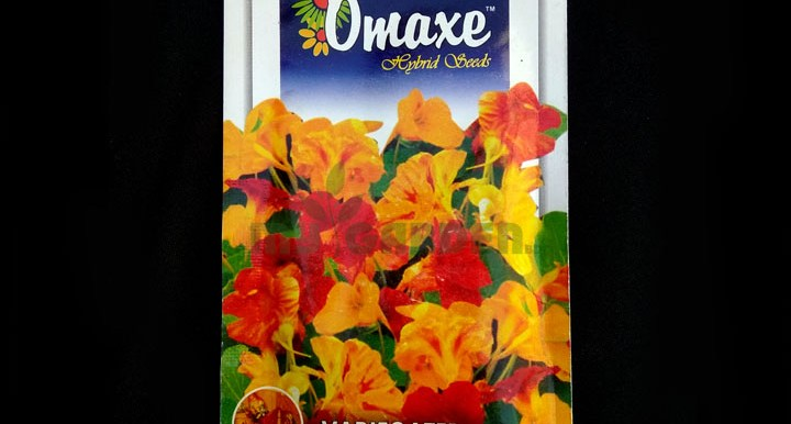 Variegated Narstartium – (40 seeds) – Omaxe - Indian