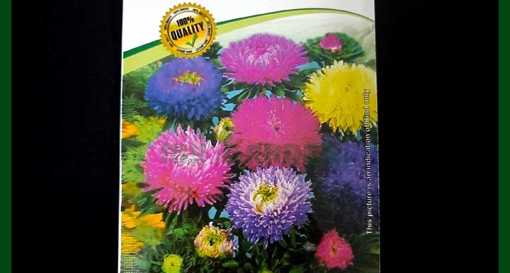Aster Mixed Color - 35 seeds - Alpine - Flower Seeds