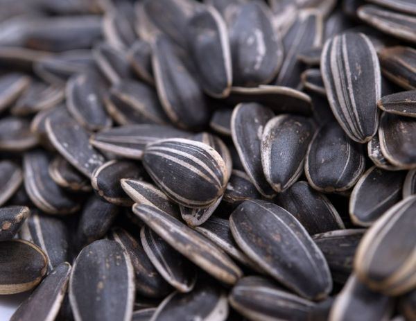 Lightly Sea Salted Dry Roasted whole Sunflower Seeds MyGerbs