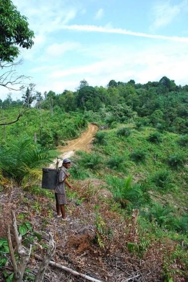 Malaysia pepper plantation