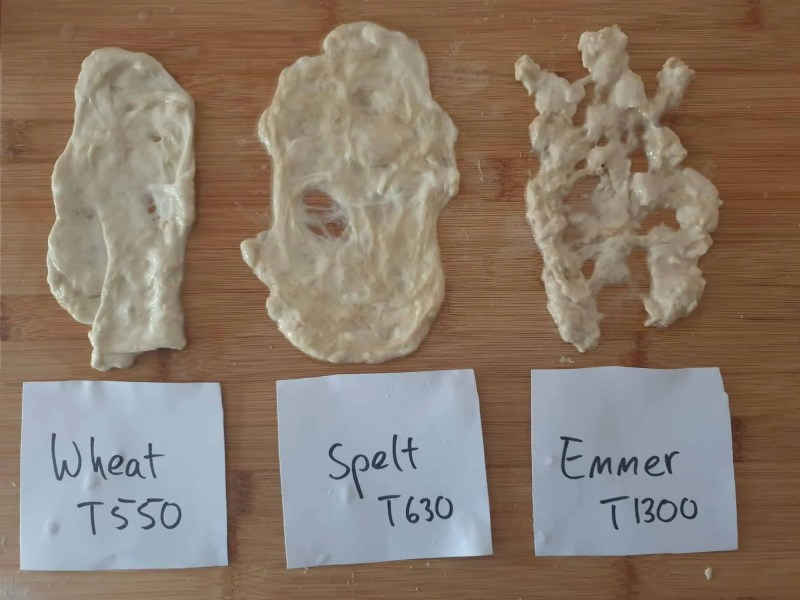 Gluten network of the three wheat species