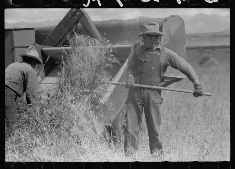 American farmers working on the wheat fields