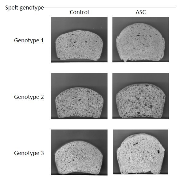 Effect of Vitamin C on the crumb and loaf volume