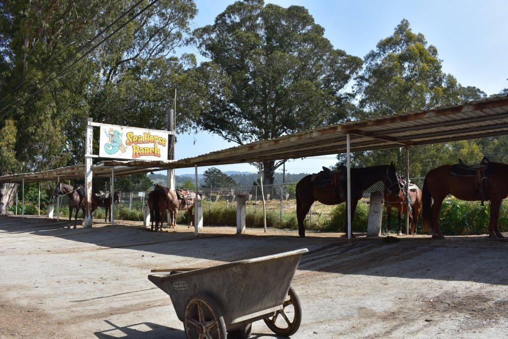 Sea Horse Ranch that offers horseback riding along the beach of Half Moon Bay