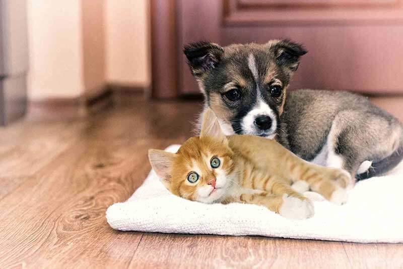 bridgeport wv puppy kitten
