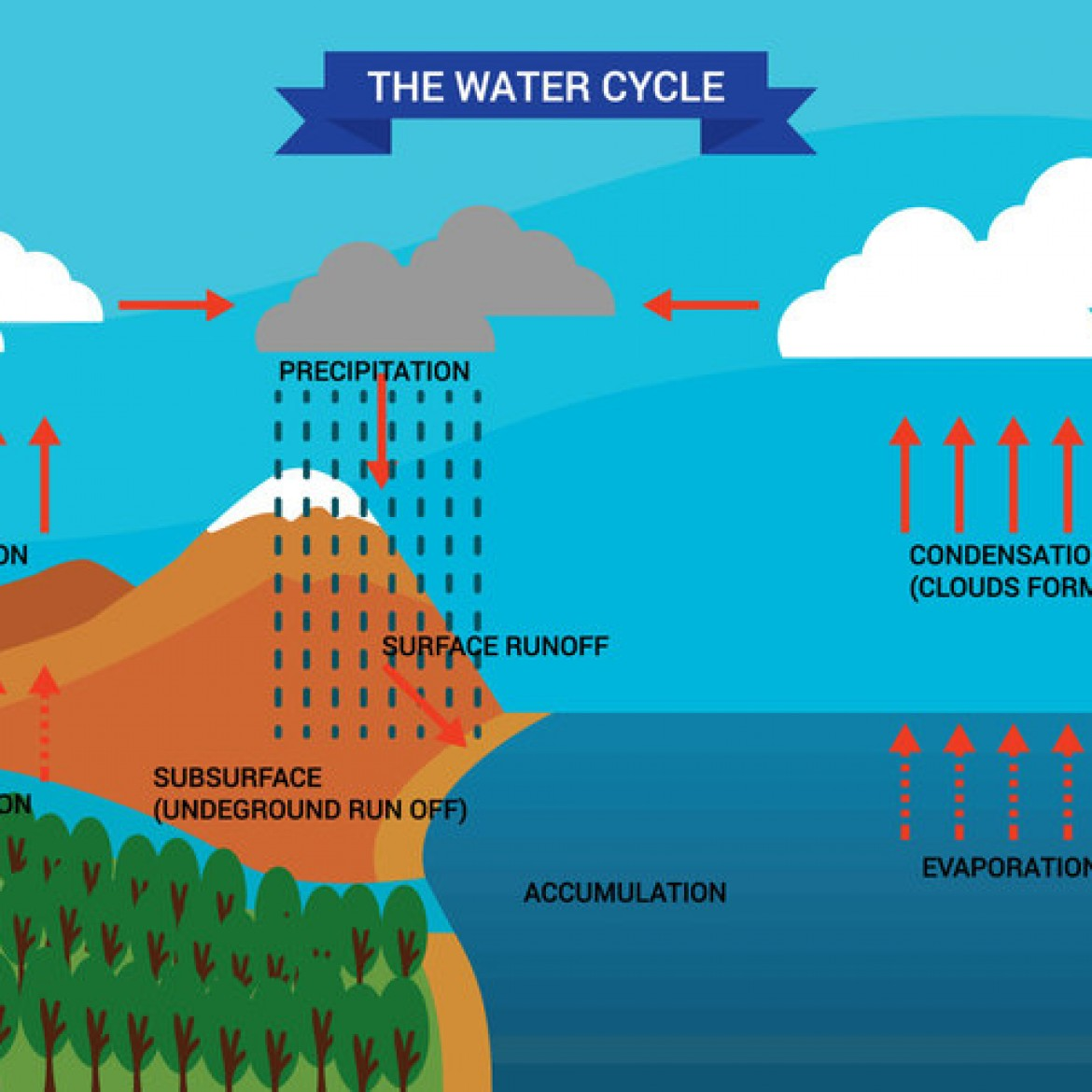 water cycle diagram with explanation 2004 honda civic ac wiring free vector 30682 my graphic