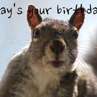 42 Most Funny Happy Birthday Pictures & Images