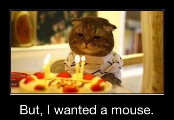 funny birthday pictures of cat