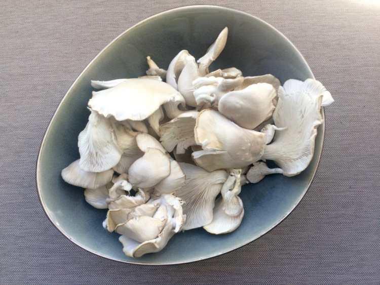 Oogst fungi-box