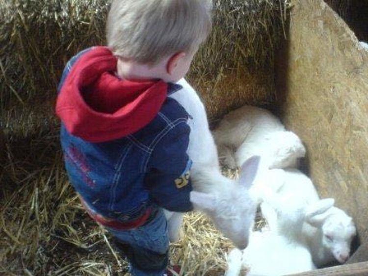 Bodhi met geitjes
