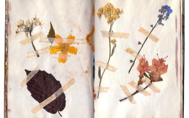 Terug van weggeweest: Bloemen persen