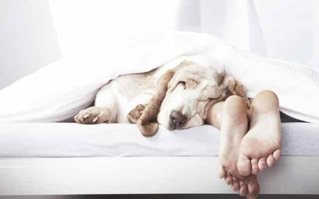 De kunst van het slapen