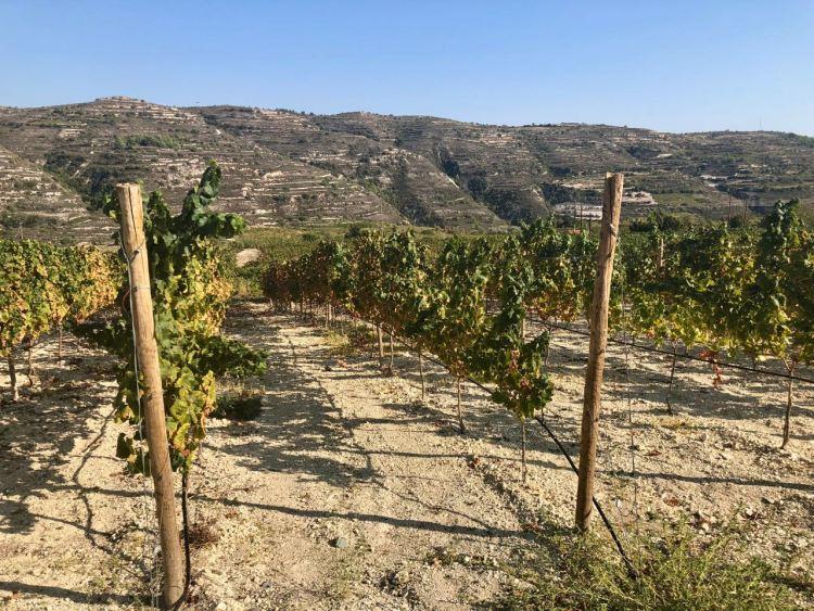 Taste of Cyprus - Wijn