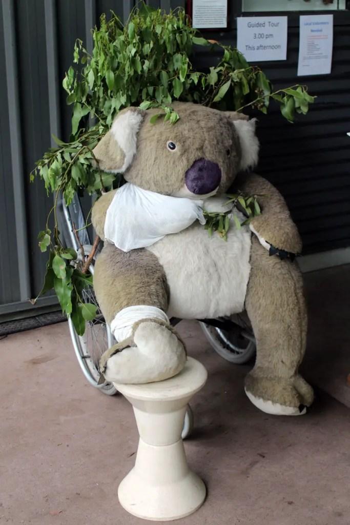 Im Koala Hospital kümmern sich Ehrenamtliche um die verletzten Tiere