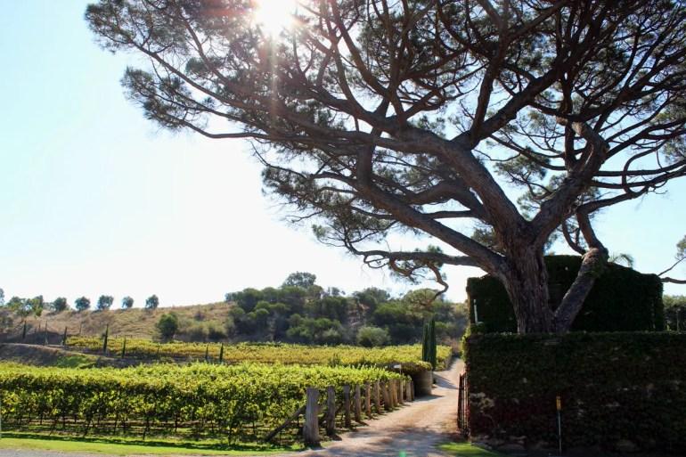 Fast wie in der Toskana: Ein Weingut im McLaren Vale