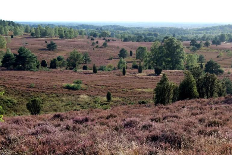 Zur Heideblüte im August und September ist der Blick vom Wilseder Berg über die Lüneburger Heide besonders schön