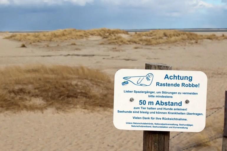 Natur pur am Lister Ellenbogen: Hier rasten auch Robben in den Dünen