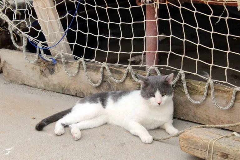 Zahlreiche Katzen streunern durch den Hafen von Corricella und liegen neben den Fischerbooten in der Sonne