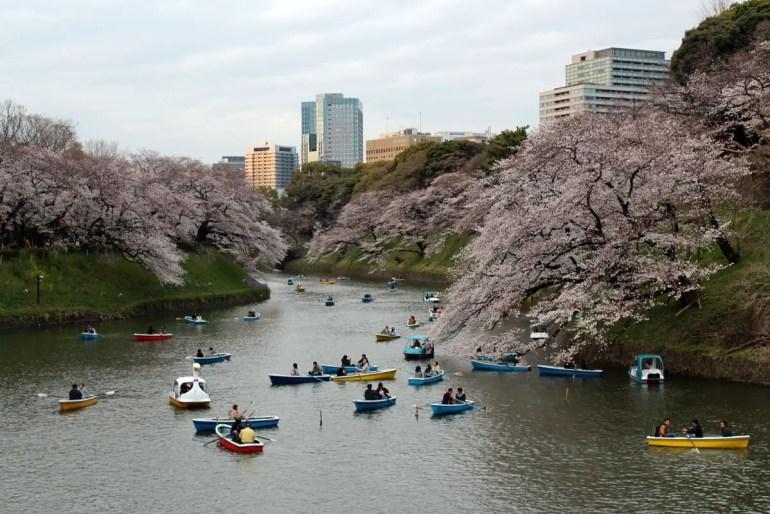 Ein Highlight zur Kirschblüte: eine Bootstour durch den Burggraben des Kaiserpalastes