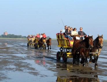 Die Wattwagen bringen die Besucher zurück ans Festland