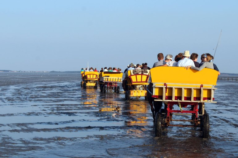 Abends geht es per Wattwagen für die Tagestouristen zurück nach Cuxhaven